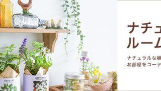 セリア新商品☆ナチュラルな植物のインテリアアイテム